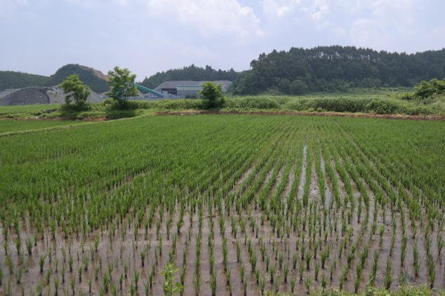 One of the many beautiful rice paddies we saw in Yangyang
